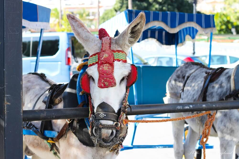 Mijas donkey taxi miserably standing in the heat all day and night